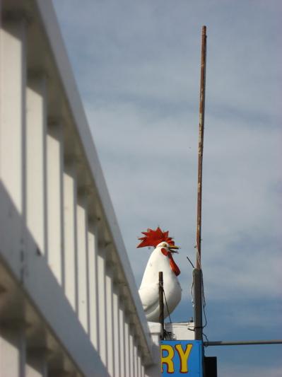 chicken-on-bldg2.jpg