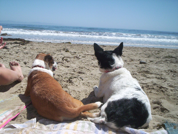 dogs-on-beach.jpg