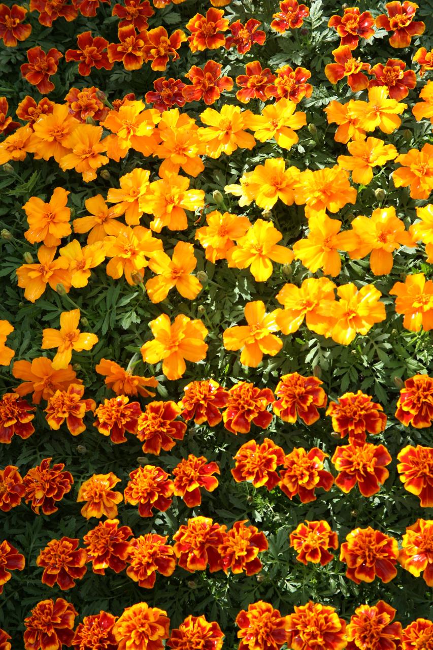 Посадка цветов под зиму - Сад и огород 3