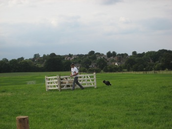 sheepdog 5