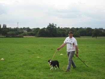 sheepdog 6