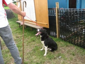 sheepdog 7