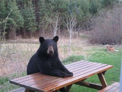 bear-picnic2.jpg