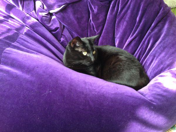 Beanbag cat
